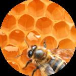Cera vergine d'api copy